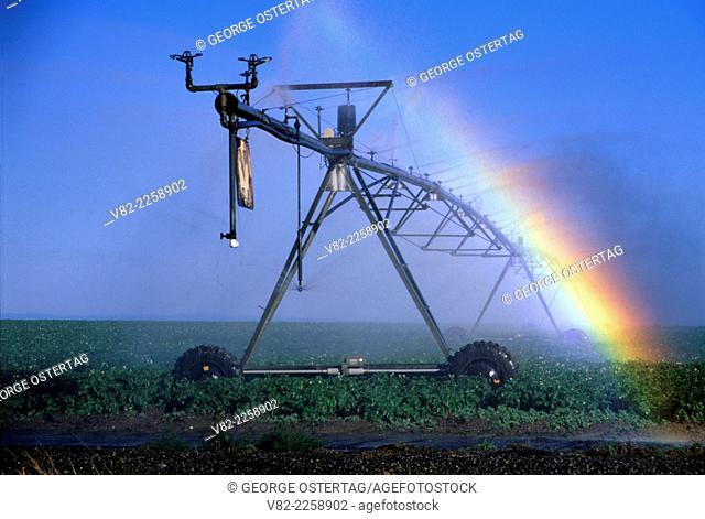 Field irrigation with rainbow, Franklin County, Washington