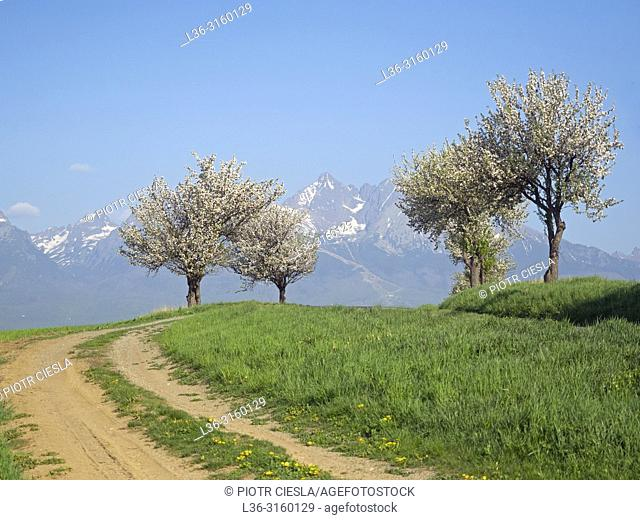 Spring. Tatra mountains. Slovakia