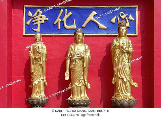 Buddhas Koon Yum, Yao Shi Fo and Di Zhang, golden statues, Ten Thousand Buddhas Monastery, Sha Tin, New Territories, Hong Kong, China