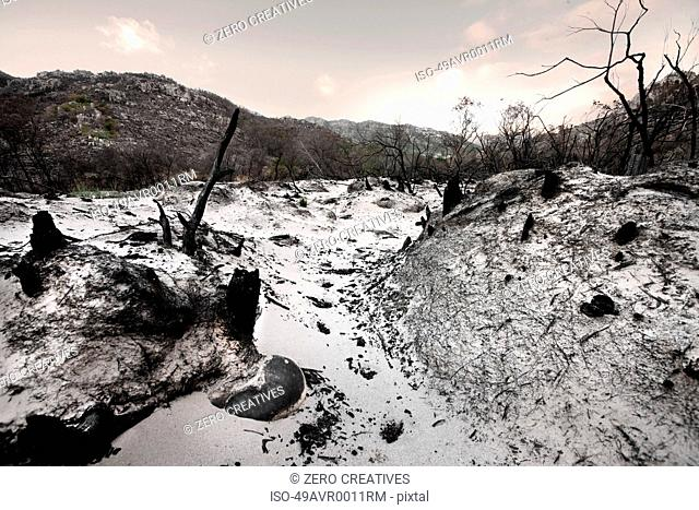 Bare trees and rocks in snowy field