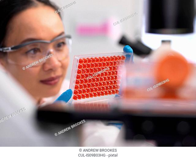Scientist preparing a micro plate with blood samples for medical testing in a laboratory
