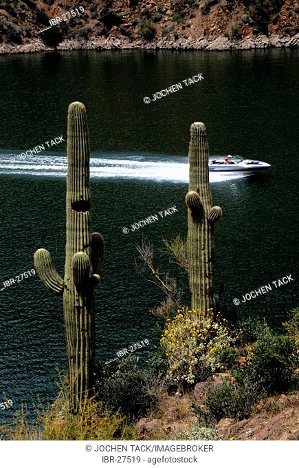USA, United States of America, Arizona: Lake Apache near Tucson