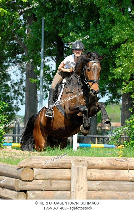 jumping Holsteiner horse