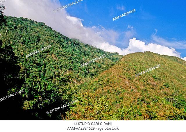 Henri Pittier National Park, Coastal Mountain Range, Venezuela