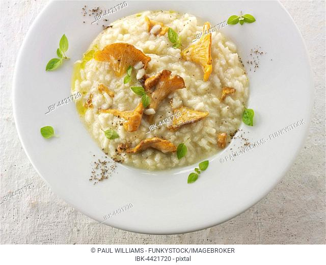 Risotto, chanterelle or girolle mushrooms (Cantharellus cibarius), sauteed in butter and herbs