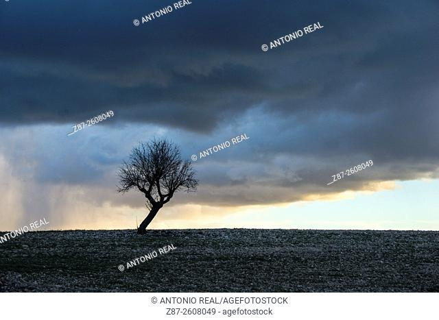 Storm clouds and single tree, Almansa, Albacete province. Spain