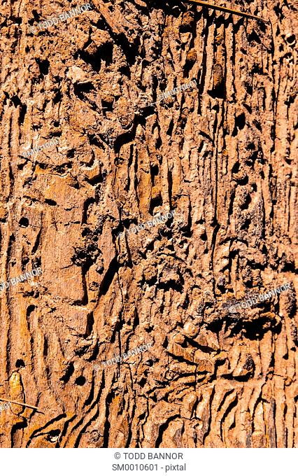 Trackways carved into old log by insects