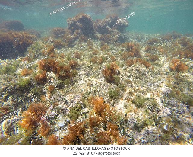 Underwater image. Las Rotas nature reserve, La Nao cape, Denia, Alicante, Spain