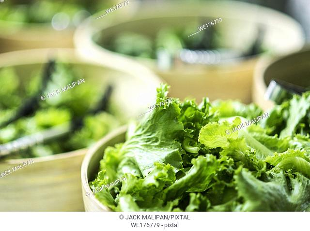 bowls of fresh organic green lettuce leaves in salad bar display