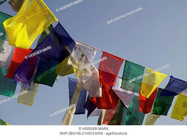 Prayer Flags above McLeod Ganj