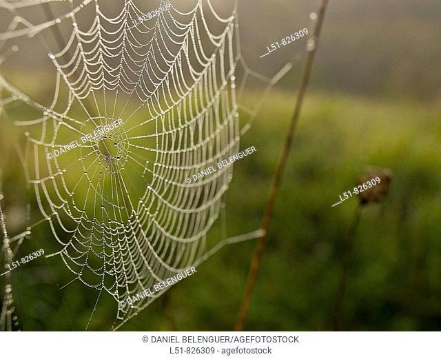 Spiderweb next to river Serpis, L'Orxa, Valencia, Comunidad Valenciana, Spain, Europe