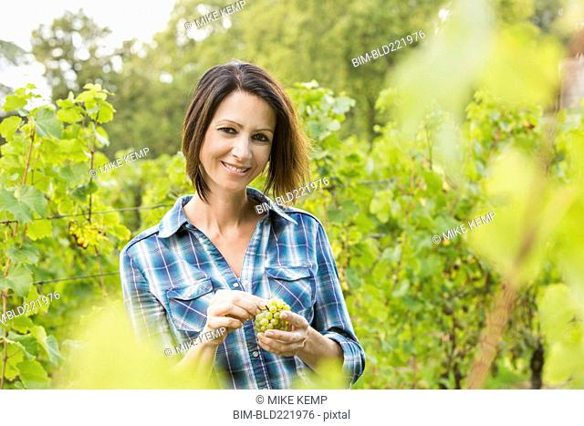 Caucasian farmer tasting grapes in vineyard