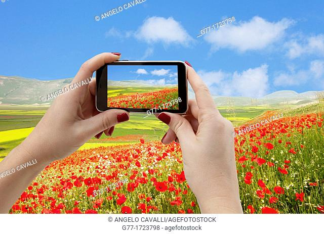 Italy. Umbria. Norcia. Highland of Castelluccio di Norcia.Taking pictures of a poppy field with Smartphone