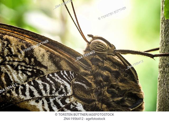 Butterfly Detail of Thorax and Compound Eye in Botanical Garden Erfurt. Germany