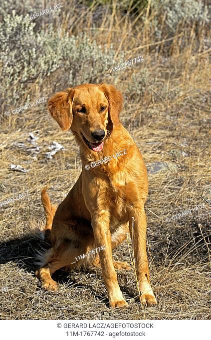 Dog sitting on Dry Grass
