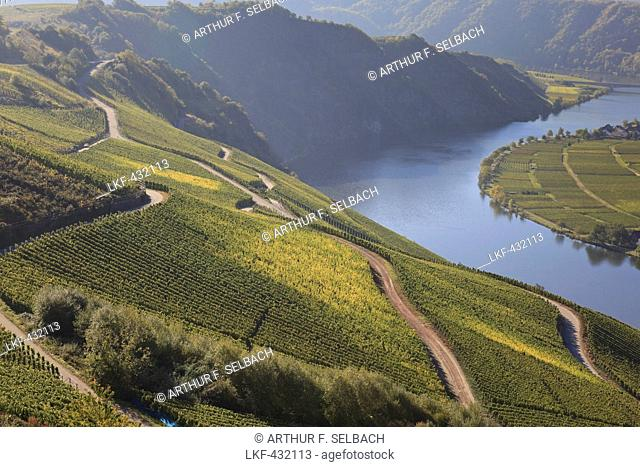 View over the vineyards of Piesport, Loreley rocks in the background near the river Moselle, Piesport, Rheinland-Pfalz, Germany
