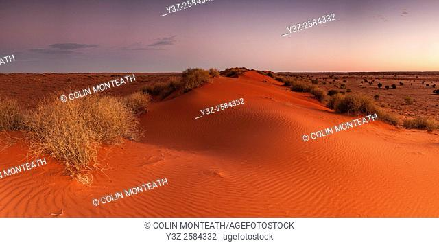 Sand dune and spinifex grass, sunset panorama, Old Andado Station, Simpson desert, Northern Territory, Central Australia