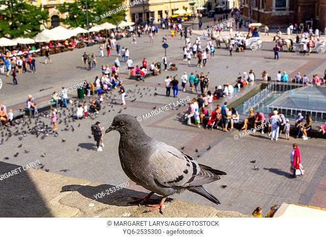 Pigeon sitting on the Cloth Hall and tourists in the Old Market Square in Krakow, historical city in Poland, Europe