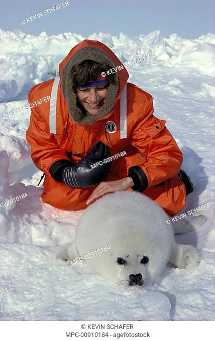 Harp Seal (Phoca groenlandicus) pup and tourist, Magdalen Islands, Canada