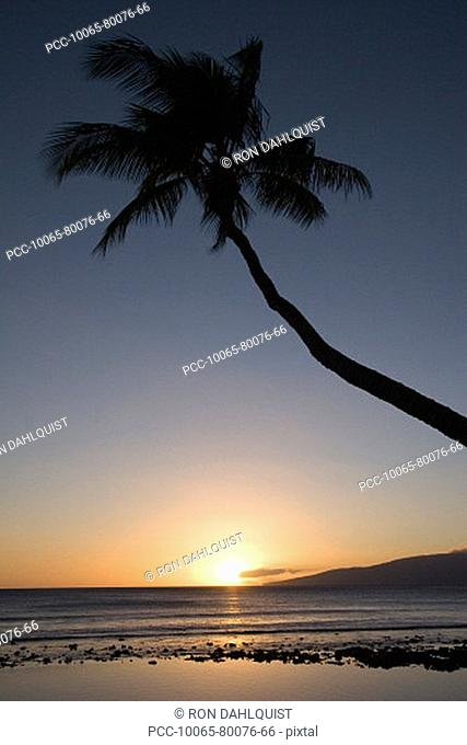 Hawaii, Palm tree silhouetted by sunset sky over ocean