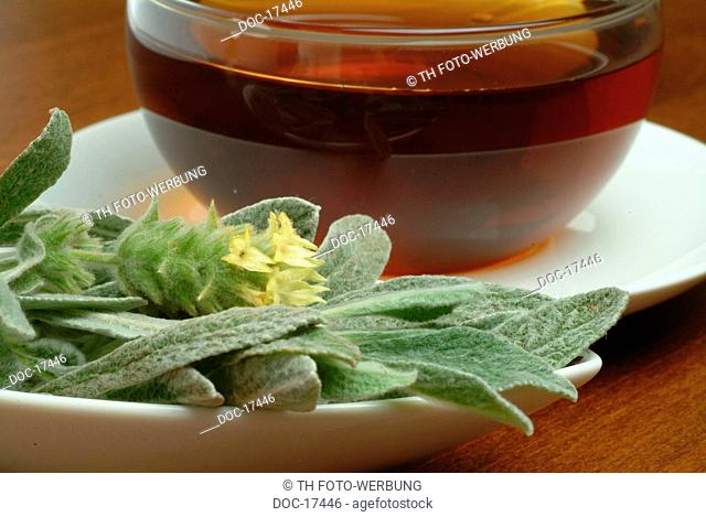 tea made of Greek mountain shepherd's tea - mountaintea - medicinal tea - herbtea - Sideritis syriaca - Marrobio - Stregonia siciliana - te