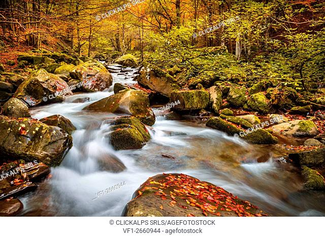 Bologna, Emilia Romagna, Italy. Dardagna river during a very colorful autumn