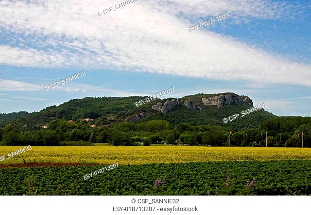 Landscape with vineyard and sunflowers in France