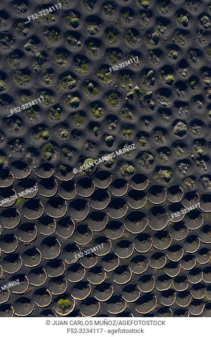 Vineyards, Landscape Volcanic, La Geria, Lanzarote Island, Canary Islands, Spain, Europe