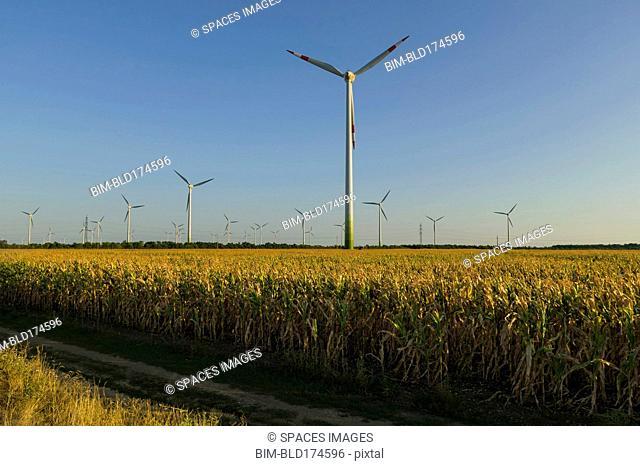 Wind turbines in rural field
