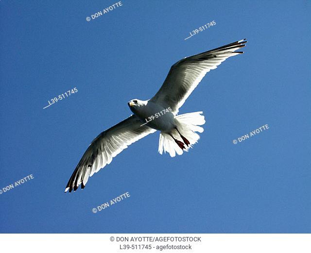Bird off of a boat in the ocean
