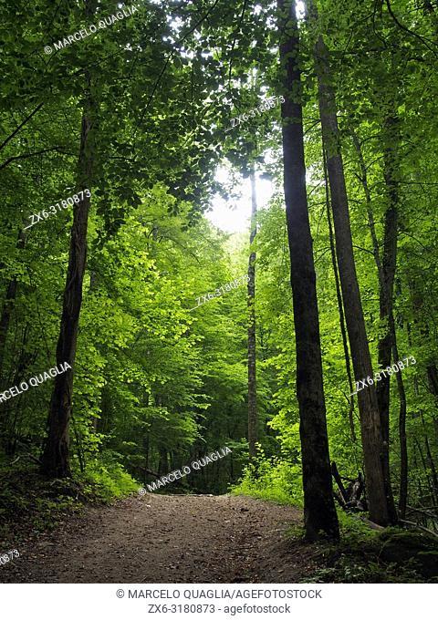 Riverside forest at Foradada stream, Mir cascade site. Santa Maria de Besora village countryside. Osona region, Barcelona province, Catalonia, Spain