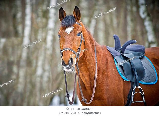 Chestnut sidesaddle horse without her rider