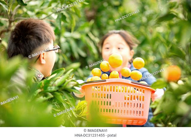 Tangerine groves and children