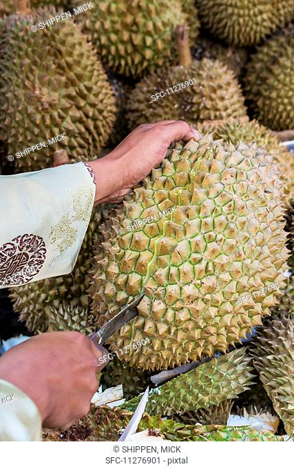 A durian being cut open