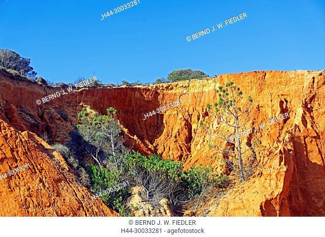 Steilküste, Felsen, rot, Pinien