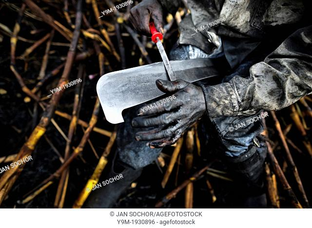 A sugar cane cutter sharpens his machete on a plantation near Florida, Valle del Cauca, Colombia, 30 May 2012 The Cauca River valley is the booming centre of...