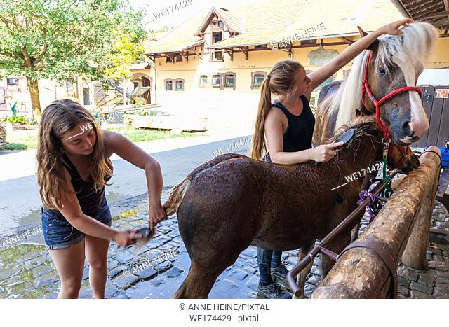 Women caring for mare with fole. Eco farm, Sauerland, Germany
