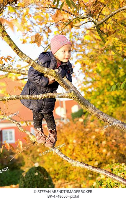 Toddler climbing a tree in autumn, Germany