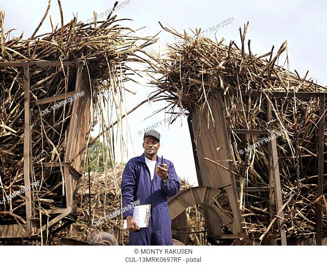 Worker With Harvested Sugar Cane