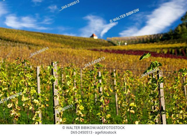 Germany, Baden-Wurttemburg, Black Forest, Gengenbach, vineyards and hilltop chapel, fall