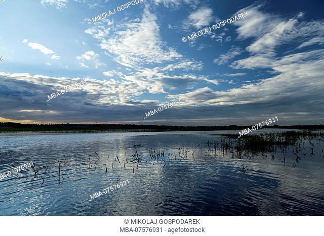 Europe, Poland, Podlaskie Voivodeship, Kolodzieje - Biebrza river