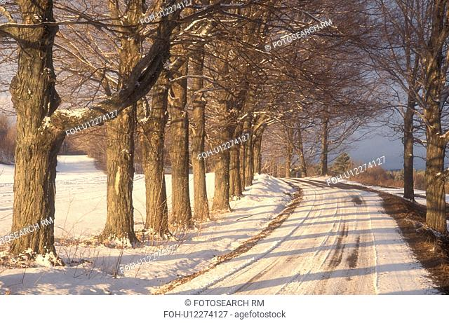 winter, Cabot, Vermont, VT, Maple trees along a snow-covered country road in winter in Cabot