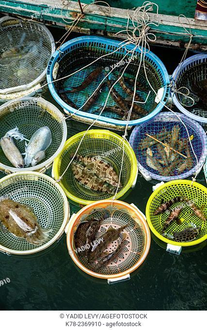 Fish catch, Halong Bay, Vietnam