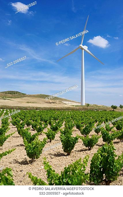 Vineyard and windmill for renewable energy production