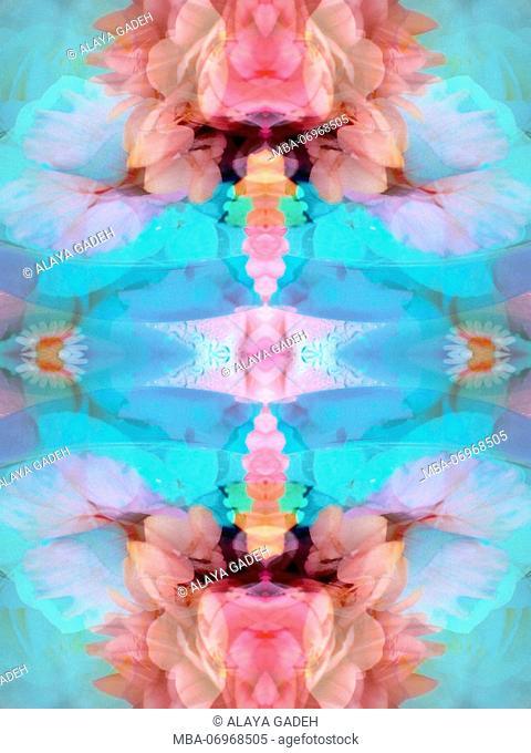 photographic flowers mandala