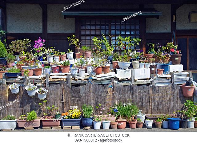 Pots full of plants and flowers outside a Kyoto house