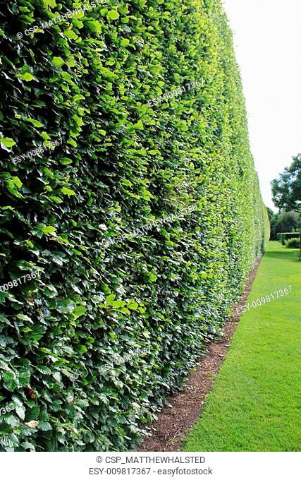 Shrub Wall