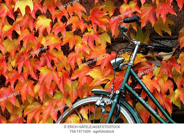 A bicycle is on a wall with colorful foliage