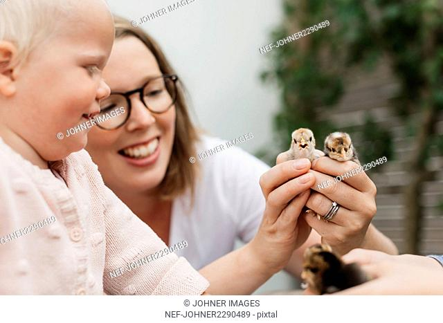 Mother showing boy little chicks