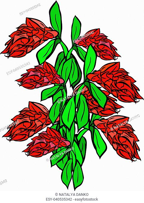 bouquet of red flowers and green leaf isolated on white background